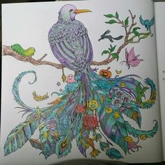 1000 Images About Animorhia Colouring Illustrations On