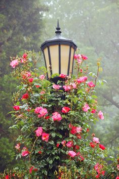 https://flic.kr/p/aKLE6V | Garden lamppost | Garden lamppost covered with roses