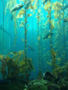seaweed nutrition realities, understanding more about seaweeds and dietary health advantages. where we can discover them. Underwater Plants, Underwater Painting, Underwater Sculpture, Monterey Bay Aquarium, Water Aesthetic, Kelp Forest, Sea Plants, Ocean Life, Marine Life