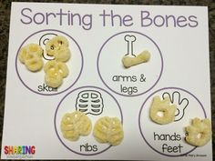Sorting the Bones activity... perfectly FREE