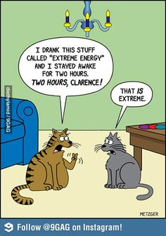 That is extreme...hahahahaha...so true;  even our younger cats sleep 18 hours per day...especially in winter!
