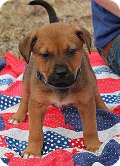 Prattville, AL - Shepherd (Unknown Type) Mix. Meet Moody 19920 a Puppy for Adoption.
