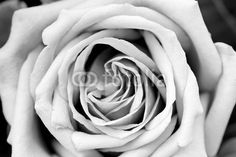 """Wall Mural """"white, black, rose - rose petal texture black and white"""" ✓ Easy Installation ✓ 365 Day Money Back Guarantee ✓ Browse other patterns from this collection!"""