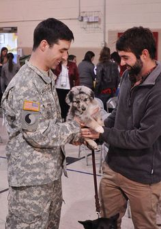 awwwww. Soldier coming home and getting an Aussie...damn straight! BEST DOGS EVER!