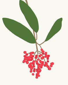 Toyon berries.