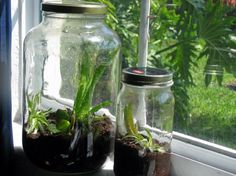 Easy tutorial on how to make a terrarium inside of a recycled glass jar.