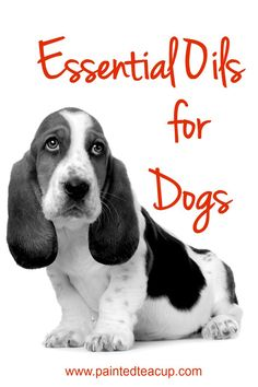 Essential Oils for Dogs. Safety, common ailments, DIY flea spray and ear remedies. www.paintedteacup.com