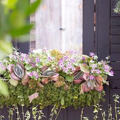 Our new favorite hayrack window box liner: planted sedum mats.
