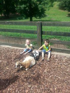 Mini kids and mini goats