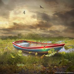 swamp by evenliu photomanipulation on 500px