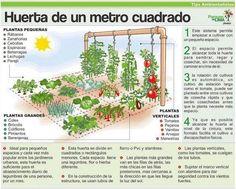 A square meter vegetable garden. Eco Garden, Potager Garden, Home Vegetable Garden, Tropical Garden, Edible Garden, Plan Potager, Organic Gardening, Gardening Tips, Plantation