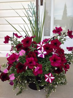 Flowers garden 782007922779238717 - Best Small Yard Landscaping & Flower Garden Design Ideas Source by Bipdecor Container Flowers, Container Plants, Container Gardening, Succulent Containers, Small Yard Landscaping, Landscaping Ideas, Landscaping With Flowers, Landscaping Edging, Landscaping Company