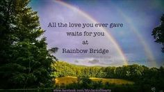 All the love you ever gave waits for you at Rainbow Bridge