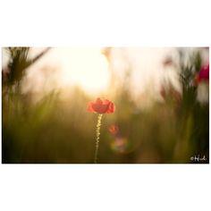 / Calm  #花をながめて #昭和記念公園 #ポピー #シャーレーポピー #東京カメラ部 #花 #花の写真館 #ファインダー越しの私の世界 #はなまっぷ #IGersJP #team_jp_ #team_jp_flower #photooftheday #poppy #flowerstagram #500px #kf_gallery #loves_japan #flower #flowers #dreamyphoto #tokyocameraclub #floral_secrets #light_nikon #tv_flowers #flowermagic #flowerslovers #flowerpower #flowerstagram #d750 #9vaga_softflowers9 gelinshop.com/...