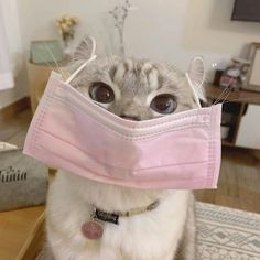 Cute Baby Cats, Cute Cats And Kittens, Cute Baby Animals, Kittens Cutest, Funny Animals, Cute Cat Memes, Funny Cats, Cute Cat Wallpaper, Cat Aesthetic