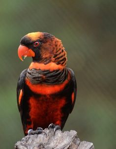 Fierce color Animals Of The World, Animals And Pets, Funny Animals, Cute Animals, Pretty Birds, Beautiful Butterflies, Beautiful Birds, Tropical Birds, Colorful Birds