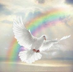 90 Best Dove ️ images | Holy spirit, Prophetic art, Christian art