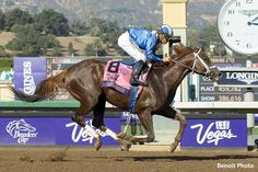 Shadwell Stables' Tamarkuz was 11-1 on the board when the field left the gates in Saturday's Breeders' Cup Las Vegas Dirt Mile, but he proved to be a dominant winner, laying well-back early and turning it on down the lane to win by 3 1/2 lengths. Breeders' Cup veteran jockey Mike Smith recorded his 23rd …