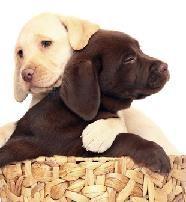 Sometimes you just need a hug! :)