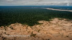 This forest could take 500 years to recover. Stunning pictures in Peru by Tomas Munita http://nyti.ms/29VYcWC
