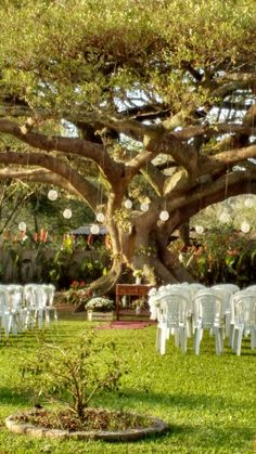 Casamento rústico, em outubro no entardecer, sob à sombra da Figueira.