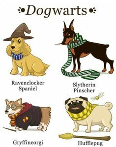 Im such a harry potter fan (potterhead) i have 2 pottermore acounts one says in ravenclaw the other gryffindor but lol Harry Potter World, Mundo Harry Potter, Harry Potter Jokes, Harry Potter Fandom, Harry Potter Dog Costume, Harry Potter Alphabet, Ravenclaw, Hufflepuff Funny, Desenhos Harry Potter