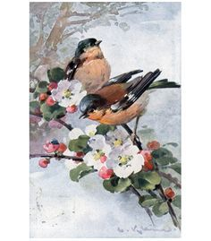 C. Klein Beautiful Red, Blue Yellow Birds on a Branch Berries Postcard