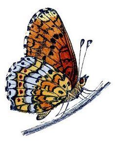 Natural History Clip Art - Butterflies, Caterpillar - The Graphics Fairy