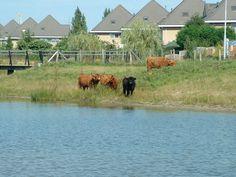 Dongevallei in Tilburg