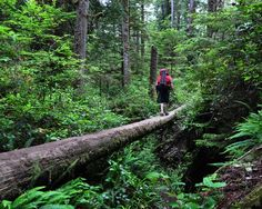 9 Challenging but Worthwhile Hikes - Mother Nature Network West Coast Trail in Vancouver