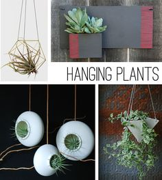 Trend Watch With Elsie Larson of A Beautiful Mess | The Etsy Blog. Love the air plants that just hang around and thrive anywhere.