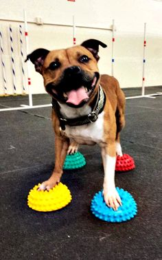 FitPAWS Paw Pods for your CanineGym®. What's in your home gym?