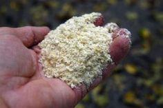 Cornmeal Uses and Reports - Natural Organic Home Garden Health Howard Garrett Dirt Doctor