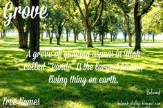 Beloved Baby Names: Tree Names Awesome Names, Cool Names, Nature Names, Character Names, Baby Names, Earth, Words, Outdoor Decor, Plants
