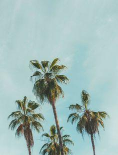 Palmy days.