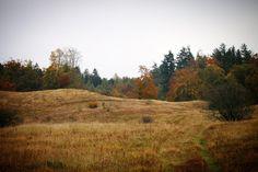 Jordløse Bakker #visitfyn #fyn #visitdenmark #naturelovers #natur #denmark #danmark #dänemark #landscape #nofilter #sky #assens #mitassens #forrest #fynerfin #skov #vielskernaturen #visitassens #lyng #picoftheday #autumn #efterår