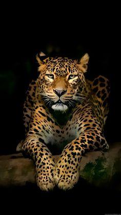 Tiger - Google+
