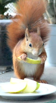 An unexpected dinner guest! Nature Animals, Animals And Pets, Baby Animals, Funny Animals, Cute Animals, Woodland Creatures, Cute Creatures, Beautiful Creatures, Animals Beautiful