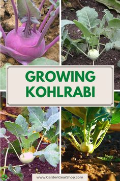 Sources Of Dietary Fiber, Sources Of Vitamin A, Gardening For Beginners, Gardening Tips, Cabbage Butterfly, Landscaping Tools, Garden Guide, Organic Matter, Planting Seeds