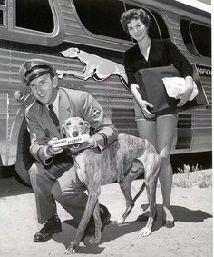 "precursor to Federal Express, the Greyhound Bus Company was owned by Fred Smith's family(founder of FEDEX)"" (previous pinner's quote) All Dogs, Best Dogs, Greyhound Kunst, Lurcher, Grey Hound Dog, Italian Greyhound, Dog Photos, Dog Art, Animals"