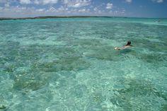 As piscinas naturais da Croa de Barra Grande são as melhores opções para mergulho, em Maragogi, no norte de #Alagoas