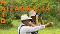 Hato Altagracia is located 5 hours by car from the municipality of San Luis de Palenque in Casanare. Hato Altagracia is composed of thirteen natural reserves, one of these reserves is the Buenaventura Nature Reserve. The Buenaventura Reserve is the ideal place for llanos safari and bird watching in Casanare, with bird species such as Cocoi Heron, Rufescent Tiger-Heron, Jabiru, Turkey Vulture and Orinoco Goose. There you can also see the best sunset in Colombia. Best Sunset, Vulture, 5 Hours, Nature Reserve, Bird Species, Bird Watching, Heron, Cowboy Hats, Safari
