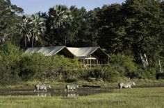 Tubu Tree Camp offers a traditional tented camp feel with large walk in tents raised on wooden platforms overlooking the stunning views and wildlife. Tree Camping, Okavango Delta, Holiday Places, Game Reserve, African Safari, East Africa, Stunning View, Cool Places To Visit, The Good Place