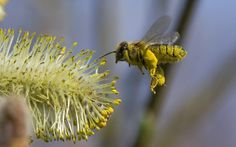What is Killing Bees? - OUR DAMNED CELL PHONES! TRUTH!    WAKING SCIENCE