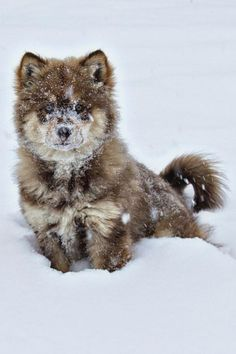 Animals And Pets, Baby Animals, Funny Animals, Cute Animals, Animals In Snow, Strange Animals, Cute Creatures, Beautiful Creatures, Animals Beautiful