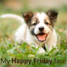 Happy Friday! Shih Tzu, Calendula Benefits, Insect Bites, Puppy Mills, Bad Mood, New Puppy, Feeling Happy, Solitude, Health Benefits