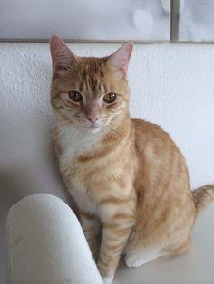 Wirklich nicht schön: #Katzenschnupfen. Was hilft aber bei der Behandlung am besten?