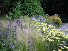Stipa 'Pony Tails'; Anthemis 'E.C. Buxton; Nepeta 'Six Hills' Giant'; and Scabiosa caucasica. It has a long flowering season, is exceptionally resilient, and has a beautiful muted, faded pallet. Other plants in this bed include 'Astelia 'Silver Spear', Salvia 'Ostfriesland' and Eryngium (add Coreopsis Moonbeam, Asphodeline lutea, Salvia verticillata?) - City Park, Dublin - Fitzwilliam Square