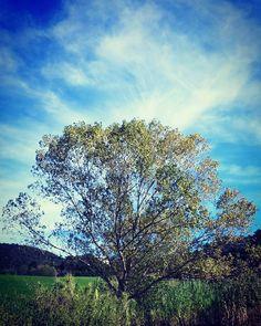 Il miglior psicanalista che tu possa trovare in circolazione è il bosco!  #livorno #toscana #tuscany #tuscanypeople #volgolivorno #volgotoscana #volgoitalia #igers #igersoftheday #igerslivorno #igerstoscana #igersitalia #perlestradedellatoscana #vivo_italia #vivolivorno #vivotoscana #italia_dev #thisislivorno #toscana_in #instalike #escursione #trekking #l4l #like4like #likeforlike
