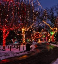 Don't miss Wildlights at the Columbus Zoo. Click to learn about more ways to celebrate Christmas. (Photo courtesy of the Columbus Zoo).